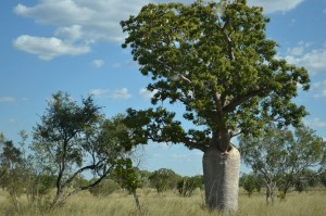 Daly-Waters,-NT-2013-04-18-093
