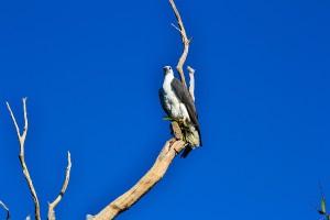 Kakadu,-NT-2013-06-02-566+lr-web